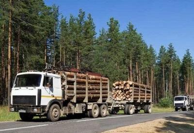 Свежесрубленный лес перевозится специальными лесовозами